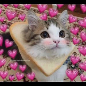 Cat Uwu