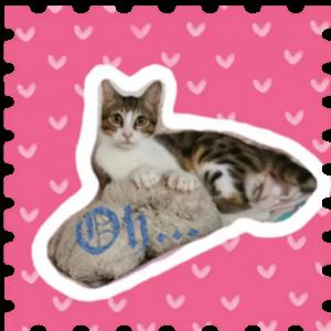 Bailey Copper cats