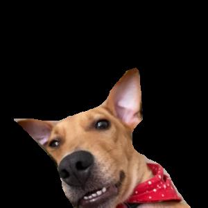 Bella-Roo