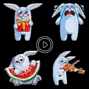 Rabbit Animated